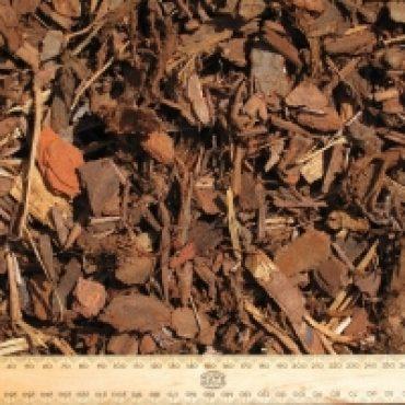 Pine Bark 1/2′