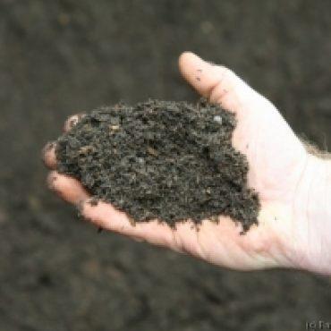 Five Way Soil